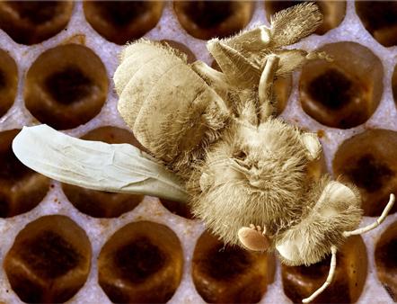 Kept Bee