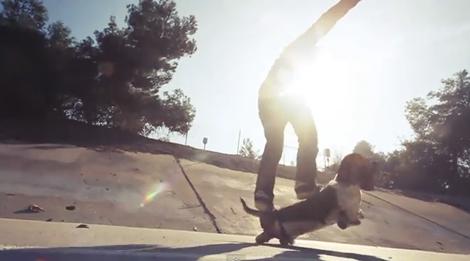 dogboarding Dogboarding